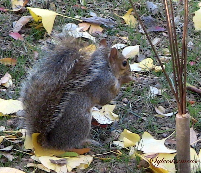 Squirrel Photo by Sylvestermouse