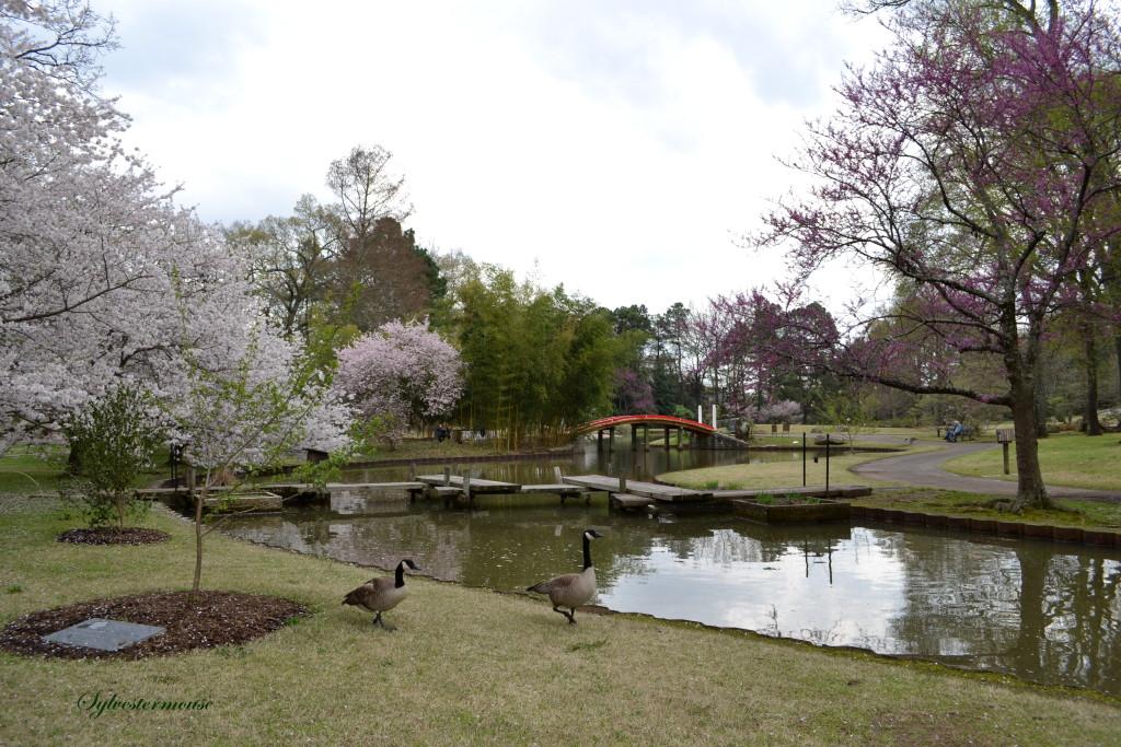 Botanical Gardens Photo by Sylvestermouse