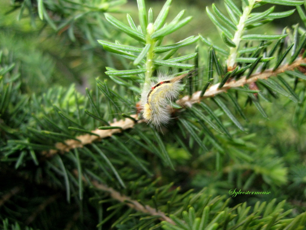 caterpillar camouflage by Sylvestermouse